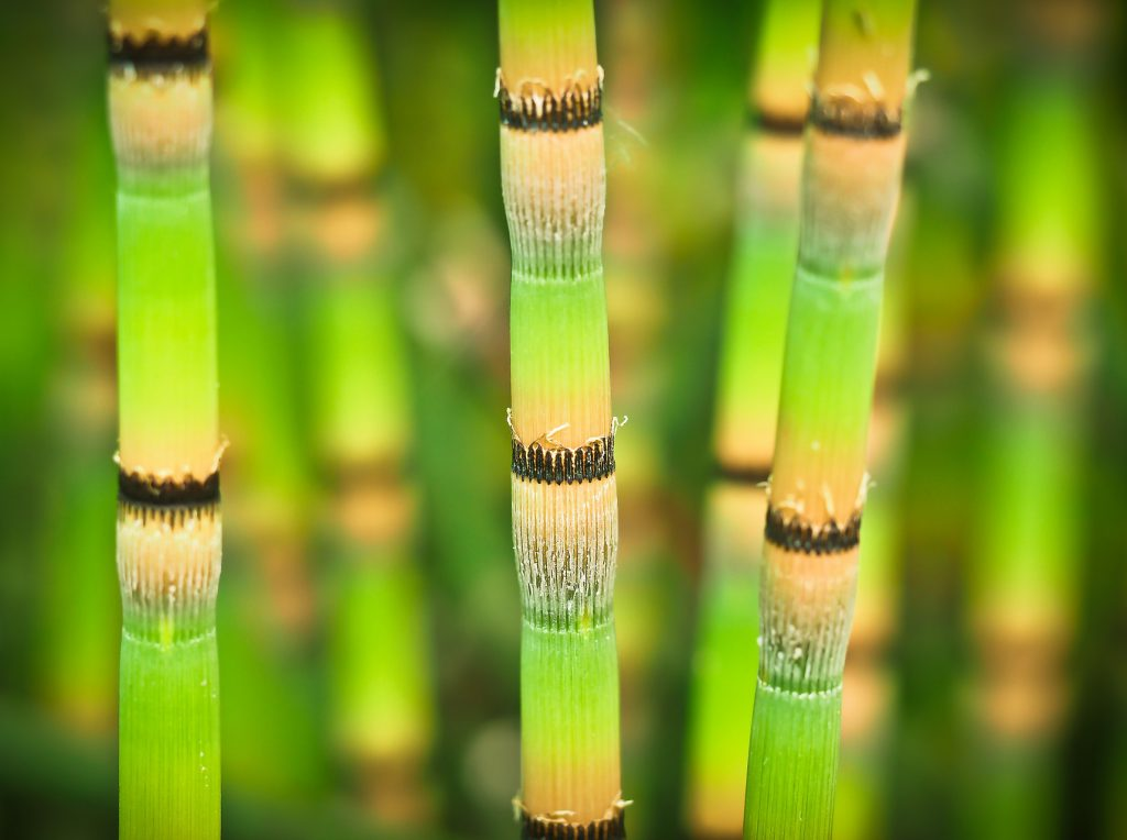 bamboo-1453274_1920